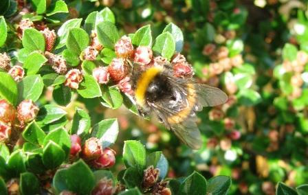 BeeOnPlant