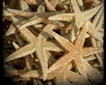 starfishinessangiemuldoney