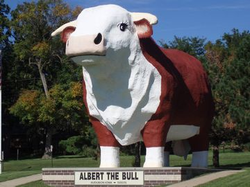 AlberttheBull